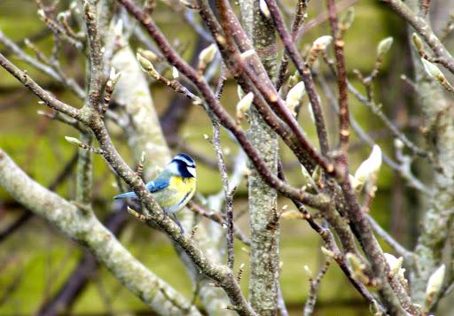 Birds (1/3)