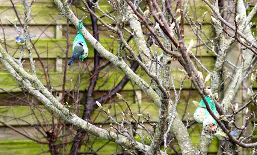 Birds (3/3)