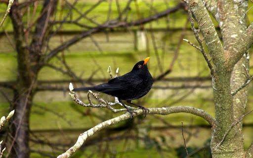 Birds (2/3)